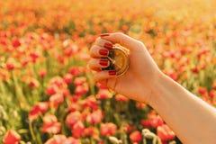 Kvinnlig hand med loppkompasset i vallmofält arkivfoton