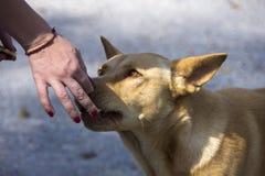 Kvinnlig hand som matar den härliga röda hunden Arkivfoto