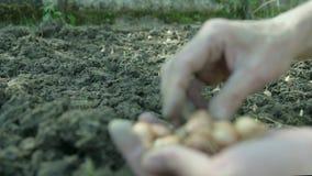 Kvinnlig hand som planterar frö i jordningen stock video