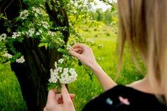 Kvinnlig hand som rymmer en filial av ett blomma tr?d fotografering för bildbyråer