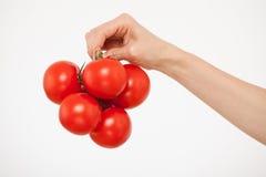 Kvinnlig hand som rymmer en grupp av tomater royaltyfri fotografi