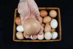 Kvinnlig hand som rymmer ett fegt ägg taget från en korg på en svart bakgrund royaltyfri bild