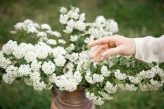 Kvinnlig hand som trycker på blommatappningfärger fotografering för bildbyråer