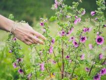 Kvinnlig hand som trycker på blommor i äng royaltyfri fotografi