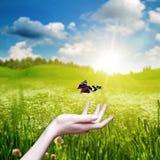 Kvinnlig handhåll en skönhetfjäril Fotografering för Bildbyråer