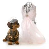 Kvinnlig hund arkivfoton