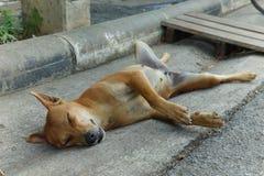Kvinnlig hundsömn upp sida ner och att fördela lägger benen på ryggen Royaltyfri Bild
