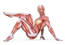 kvinnlig kropp för illustration 3D utan hud, anatomi och muskler som isoleras på vit Arkivfoto