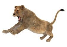 Kvinnlig Lion Arkivbild