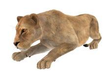 Kvinnlig Lion Royaltyfria Foton