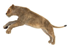 Kvinnlig Lion Arkivbilder