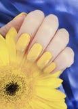 Kvinnlig manikyr, elegans för blomma för gerberaskönhetdesign, livsstilsilketyg royaltyfria bilder