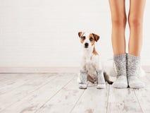 Kvinnlig och hund i sockor Arkivbilder