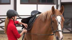 Kvinnlig ryttare som förbereder en hästsadel lager videofilmer