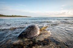 Kvinnlig simning för sköldpadda för grönt hav i havet Royaltyfria Bilder