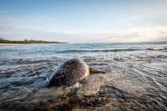 Kvinnlig simning för sköldpadda för grönt hav i havet Royaltyfri Bild