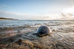Kvinnlig simning för sköldpadda för grönt hav i havet Royaltyfri Fotografi