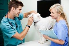 Kvinnlig sjuksköterska With Veterinarian Doctor som undersöker A Royaltyfri Foto