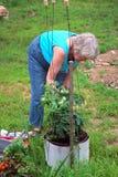 Kvinnlig trädgårdsmästare Royaltyfri Bild