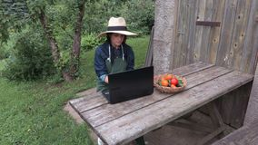 Kvinnlig trädgårdsmästare nära bärbara datorn som kontrollerar grönsakerna stock video
