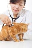 Kvinnlig veterinär- görande undersökning en gullig katt Arkivbilder