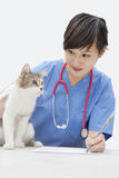 Kvinnlig veterinär som ser katten, medan skriva på papper över grå bakgrund Arkivfoto