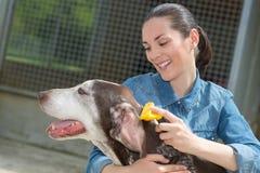 Kvinnlig veterinär som slår hunden på det djura skyddet arkivfoton