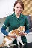 Kvinnlig veterinär som undersöker Cat In Surgery Arkivbild
