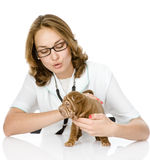 Kvinnlig veterinär som undersöker en sharpeivalphund. Royaltyfri Foto