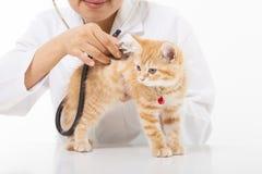 Kvinnlig veterinär- görande undersökning en gullig katt på kliniken Royaltyfri Fotografi