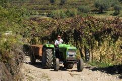 Kvinnlig vinhandlare som kör traktoren i vingården Arkivfoto