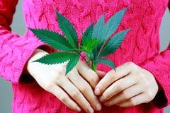 Kvinnliga händer rymmer det gröna nya bladet för marijuana (cannabis) arkivfoton