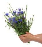 Kvinnliga händer rymmer ett fång av blommor arkivfoto