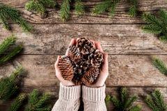 Kvinnliga händer som rymmer a, sörjer kottar på träbakgrund med julgranfilialer, granen, en, gran, lärk royaltyfria foton