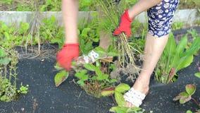 Kvinnliga handrevaogräs stock video