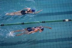 Kvinnliga simmare som springer i simbassängen Arkivbild