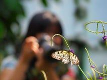 Kvinnligfotograf som tar ett foto av en fjäril Royaltyfri Fotografi