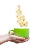 Kvinnlighänder som rymmer koppar, blommar på vit bakgrund Vår Co Fotografering för Bildbyråer