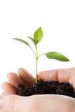 kvinnlighänder transplanterar treen Arkivfoton