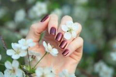 kvinnlign hands manicuren Royaltyfri Fotografi