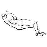 Kvinnlign konturn, baksida, kvinnan, kroppen, teckning, skissar Royaltyfri Fotografi