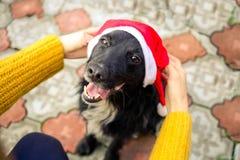 Kvinnlign räcker det pålagda Santa Claus locket på en hund Förväntan av det nya året År av en hund Arkivfoto