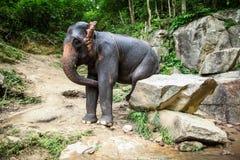 Kvinnlign som elefanten sitter på stenblocket, skrapar sig Arkivbilder