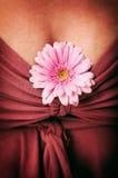 kvinnligt Royaltyfria Foton