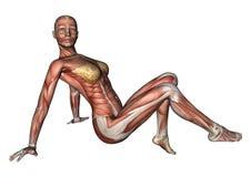 Kvinnligt anatomidiagram royaltyfri illustrationer