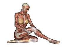 Kvinnligt anatomidiagram vektor illustrationer