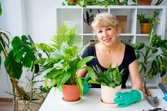 Kvinnligt blomsterhandlarearbete Royaltyfri Bild