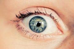 Kvinnligt grönt öga Royaltyfri Fotografi