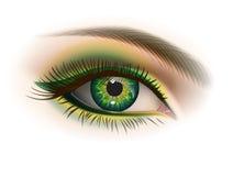 Kvinnligt grönt öga Arkivbild