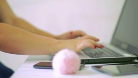 Kvinnligt handtryck på bärbar datortangentbordet Skärpa överförs långsamt från handen till pälsbollen som ligger i förgrunden arkivfilmer